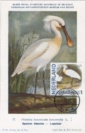 B016 NEDERLAND Lepelaar