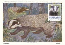þþþ - Zoogdieren Das