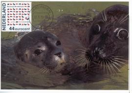 2010 NETHERLANDS Waddenzee Seal