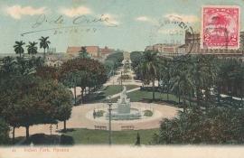 © 1908 - CUBA - Palm trees