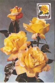 1975 NEW ZEALAND Yellow roses