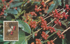 ®®® 1961 - CATA 358 - SURINAME Koffie