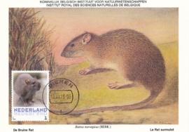 þþþ - Zoogdieren Bruine rat