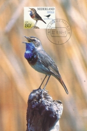 ® 1994 - CATA 1599 Blauwborstje