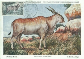 1962 AOF BRAZZAVILLE Eland Antilope