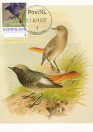 þþþ - Vogels 2017 Zwarte roodstaart