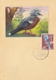 ®®®®® 1959 CATA 56 NNG Kroonduif