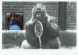 2007 NETHERLANDS Blijdorp Zoo Gorilla