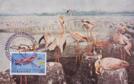 ®®® 1971 - CATA 554 - SURINAME Flamingo