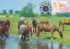 ® 2011 - CATA 2797 Paard