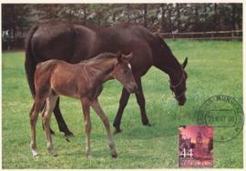 ® 2007 CATA 2492a Paarden