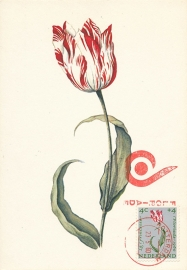 ® 1960 - CATA 738 Tulpen