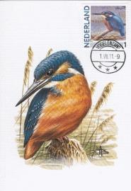 B143 NEDERLAND IJsvogel