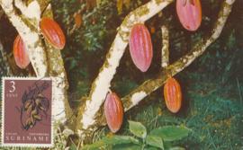 ®®® 1961 - CATA 356 - SURINAME Cacao