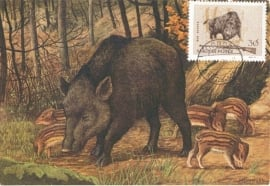 1963 HUNGARY - Wild boar
