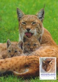 þþþ - Zoogdieren Lynx
