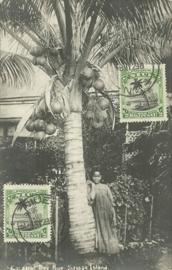 © 1929 - NIUE Coconut tree