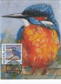 B144 NEDERLAND IJsvogel