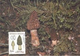 1987 FRANCE - Mushroom Morchella