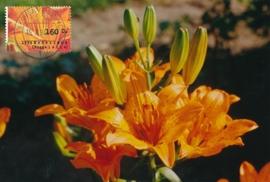 ® 1994 - CATA 1604 Roggelelie