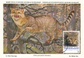 þþþ - Zoogdieren Wilde kat
