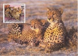 1984 HAUTE VOLTA Cheetah