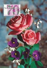 ® 1982 - CATA 1265 Kaaps viool