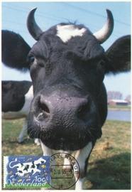 ® 1995 - CATA 1630 Hollandse koe