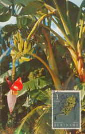 ®®® 1961 - CATA 354 - SURINAME Bananen