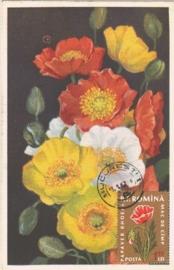 1962 ROMANIA - Papaver Poppies
