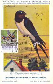 þþþ - Vogels 2017 Boerenzwaluw