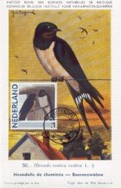 B005 NEDERLAND Boerenzwaluw