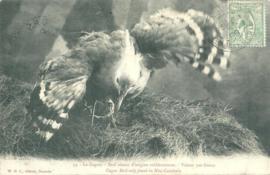 © 1909 - NEW CALEDONIA - Kagu bird