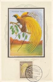 ®®®®® 1954 CATA 26 NNG Paradijsvogel Hollandia-Binnen