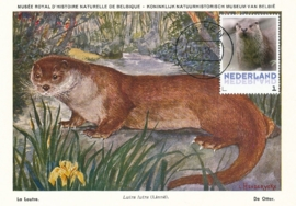 þþþ - Zoogdieren Otter