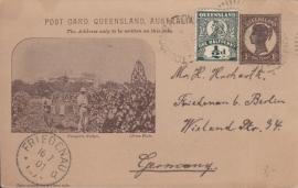 © 1901 QUEENSLAND AUSTRALIA - Leaves