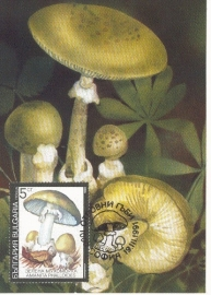 1991 BULGARIA - Mushroom Amanita