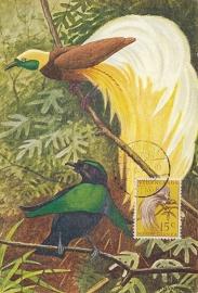 ®®®®® 1954 CATA 28 NNG Paradijsvogel Hollandia-Stad