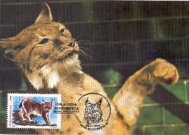1990 ROMANIA - Lynx