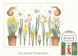 ® 1996 - CATA 1668 Narcisbol