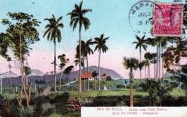 © 1909 - CUBA - Palm trees