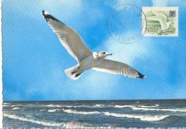 1968 NORFOLK ISLAND - Seagull
