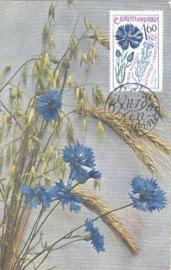 1965 CZECHOSLOVAKIA Centaurea