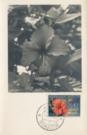 ®® 1955 NVPH 252 NED. ANTILLEN Hibiscus