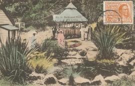 © 1920 - NEW ZEALAND - Leaves