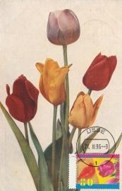 ® 1996 - CATA 1669 Tulpen