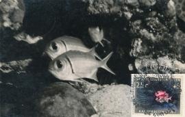 ®® 1960 NVPH 317 NED. ANTILLEN Tropische vis