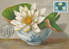 ® 1960 - CATA 740 Waterlelie