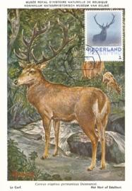 þþþ - Zoogdieren Edelhert