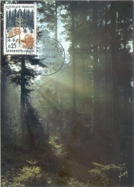 1965 FRANCE - Forest